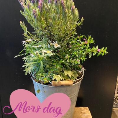 Udendørs beplantning mors dag